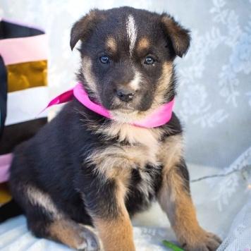 Очаровательные щенки - Собаки в добрые руки