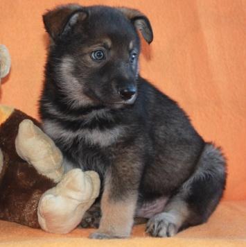 Сэм и Рада - Собаки в добрые руки