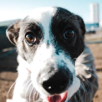 Бруни - Собаки в добрые руки