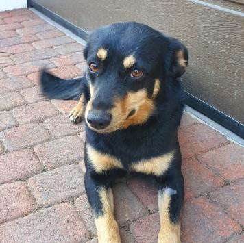 Кася - Найденные собаки