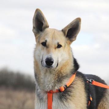 Лунтик - Собаки в добрые руки
