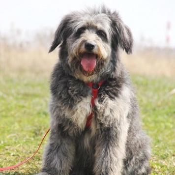 Тофифи - Собаки в добрые руки