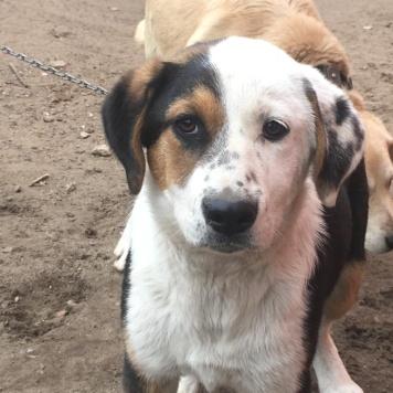 Фрэдди - Собаки в добрые руки