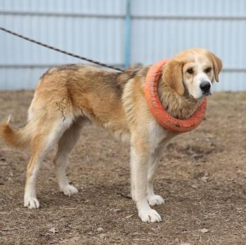Шуберт - Собаки в добрые руки