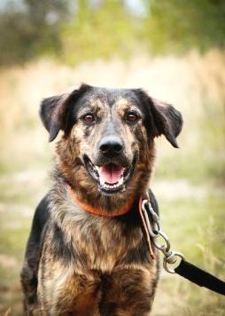 Бернард - Собаки в добрые руки