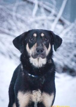 Джорджия - Собаки в добрые руки