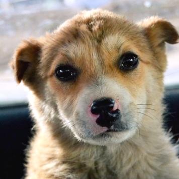 Аля - Собаки в добрые руки