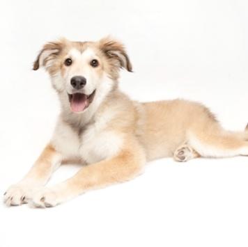 Гелла - Собаки в добрые руки