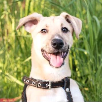 Весёлая Аришка - Собаки в добрые руки