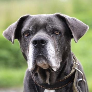 Томсон - Собаки в добрые руки