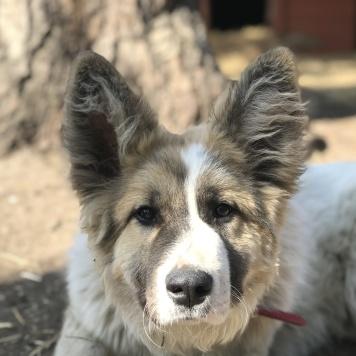 Соломон - Собаки в добрые руки