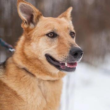 Вейси - Собаки в добрые руки