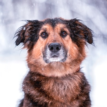 Джони - Найденные собаки