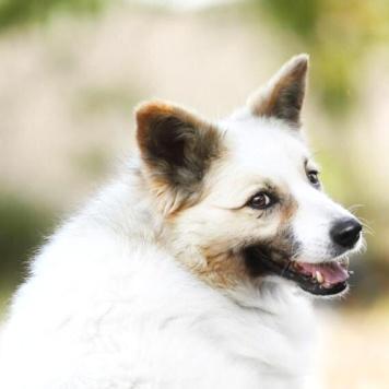 Сметанка - Собаки в добрые руки
