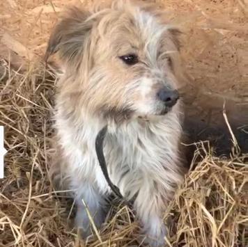 Чарлик - Собаки в добрые руки