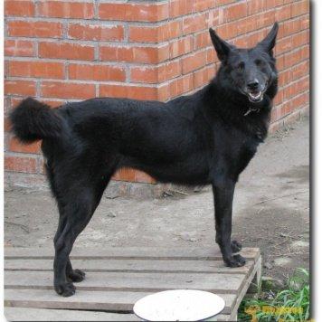 Норда - Собаки в добрые руки
