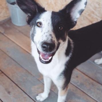 Усама - Собаки в добрые руки