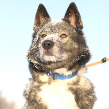 Атикус - Собаки в добрые руки