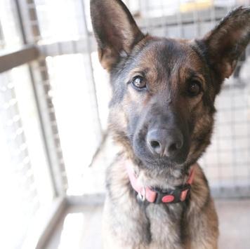 Масяо - Собаки в добрые руки