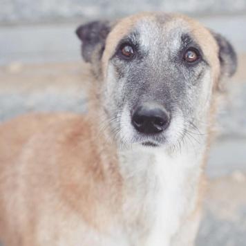 Арина - Собаки в добрые руки