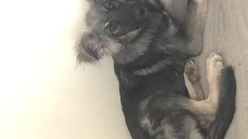 Пабло - Собаки в добрые руки