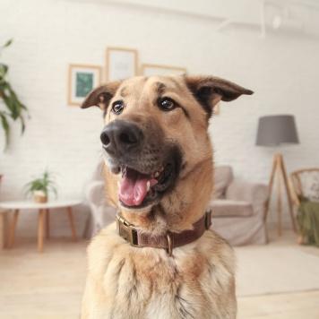 Арахис - Собаки в добрые руки