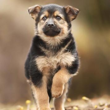 Томик - Собаки в добрые руки