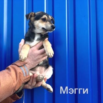 Щенята - Собаки в добрые руки