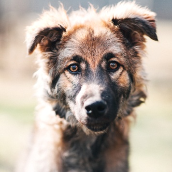 Кеша - Собаки в добрые руки