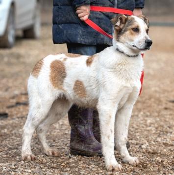 Дэнни - Собаки в добрые руки