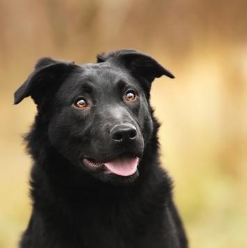 Луночка - Собаки в добрые руки