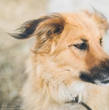 Тильда - Найденные собаки