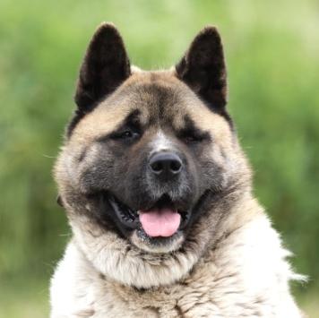 Хэнкс - Собаки в добрые руки
