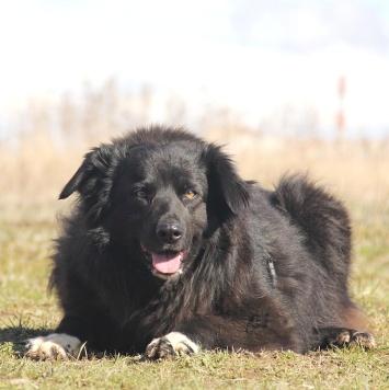 Лапка - Собаки в добрые руки