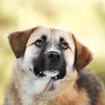 Иришка - Собаки в добрые руки