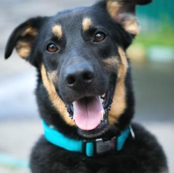 Амиго - Собаки в добрые руки