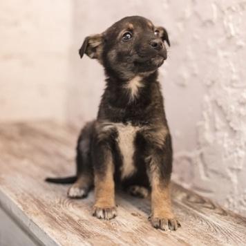 Горошинка - Собаки в добрые руки