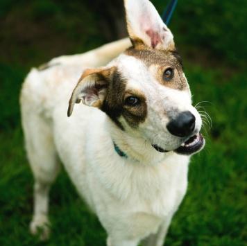 Спенсер - Собаки в добрые руки