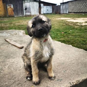 Щенок девочка - Собаки в добрые руки