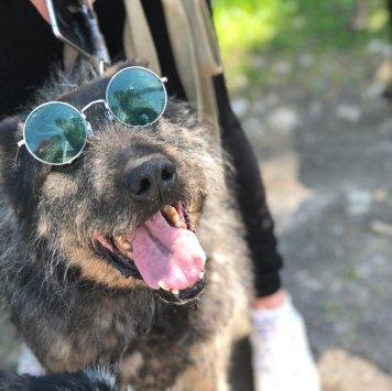 Гриша - Собаки в добрые руки