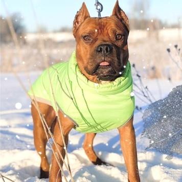Круиз - Собаки в добрые руки