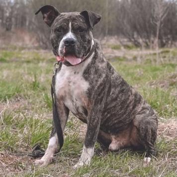 Вольвик - Собаки в добрые руки