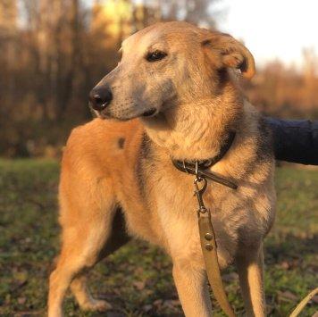Гуня - Собаки в добрые руки