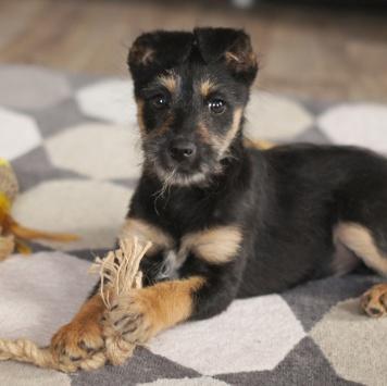Бабетта - Собаки в добрые руки