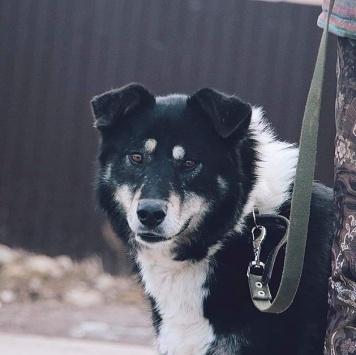 Сона - Собаки в добрые руки
