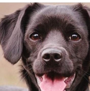 София - Собаки в добрые руки