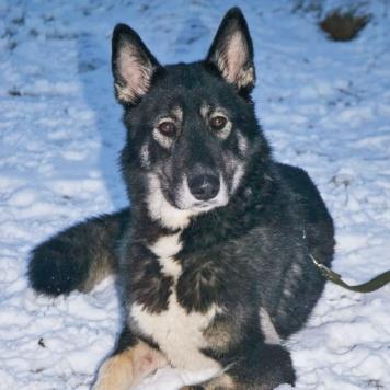 Руслан - Собаки в добрые руки