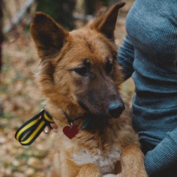Ева - Собаки в добрые руки