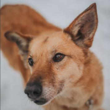 Эви - Собаки в добрые руки