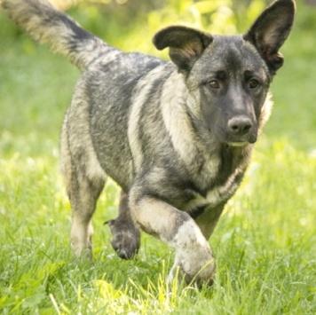 Тыковка - Собаки в добрые руки